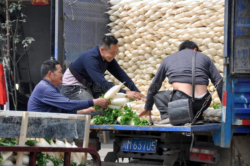 Pengzhou. China: Farmer's Co-op Workers. Workers at a farmer's co-operative load a truck with freshly harvested white Daikon radishes brought in by Sichuan royalty free stock photos