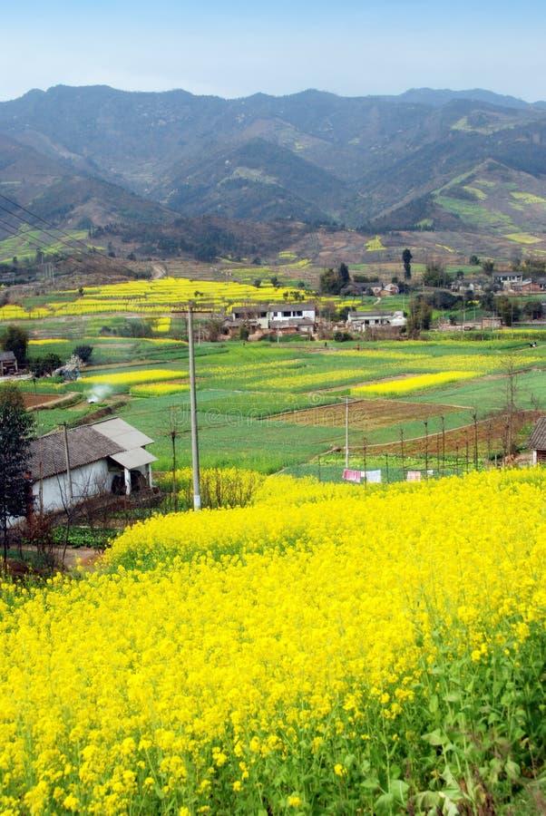 Pengzhou, China: Gebieden van de Bloemen van het Raapzaad royalty-vrije stock foto's