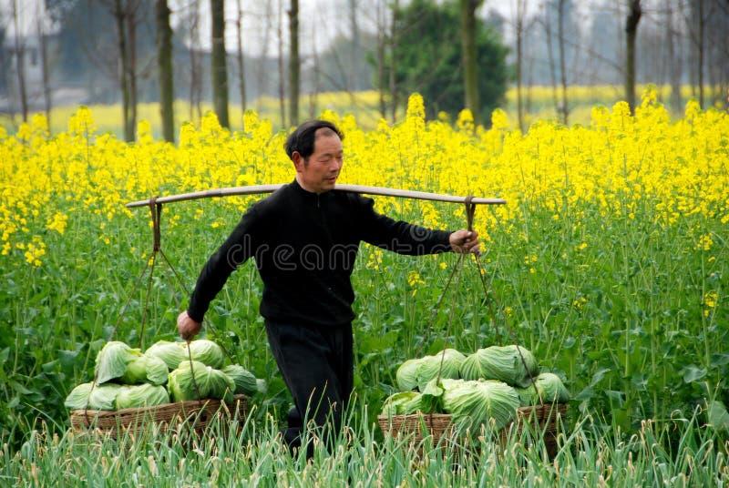 Pengzhou, China: Granjero con las coles foto de archivo libre de regalías