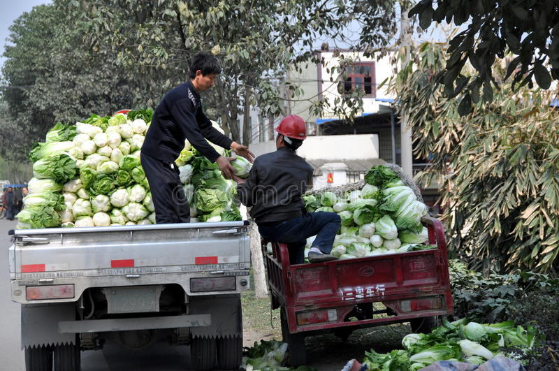 Pengzhou, China: Granjero con las coles imagen de archivo
