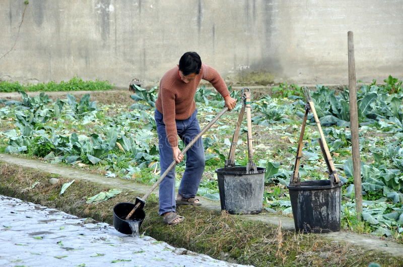 Pengzhou, China: Seedlings molhando do fazendeiro imagem de stock