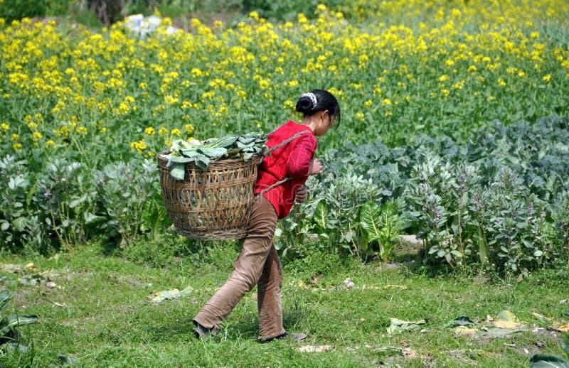 Pengzhou, China: Vrouw die aan Landbouwbedrijf werkt stock afbeeldingen