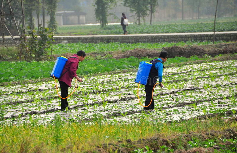 Download Pengzhou, China: Women Spraying Field Editorial Stock Photo - Image: 35166318