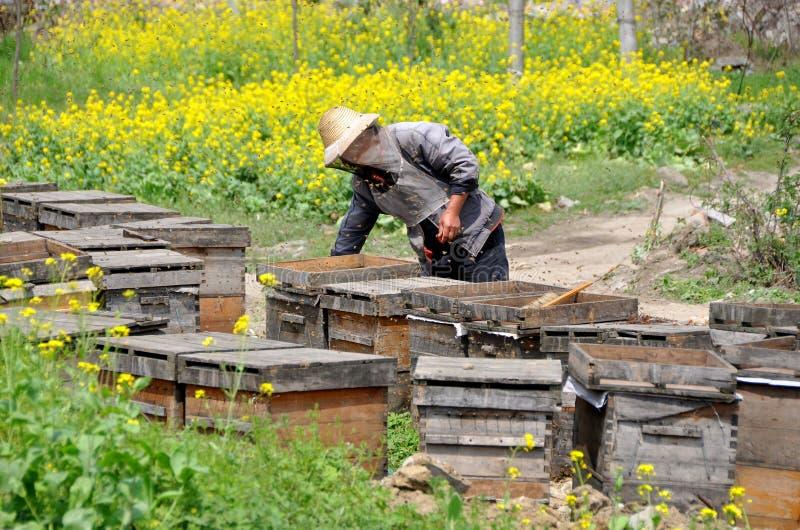 Pengzhou, Chine : Apiculteur avec des ruches images libres de droits
