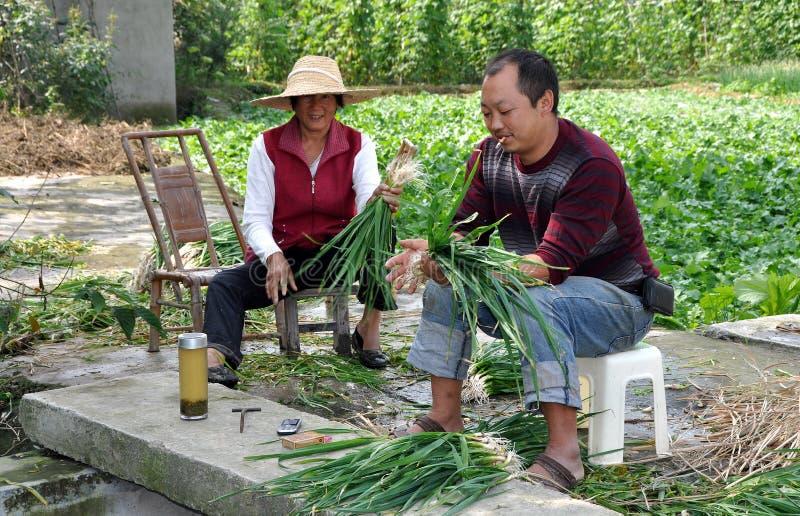 Pengzhou, Chine : Fermiers empaquetant des usines d'ail photographie stock libre de droits