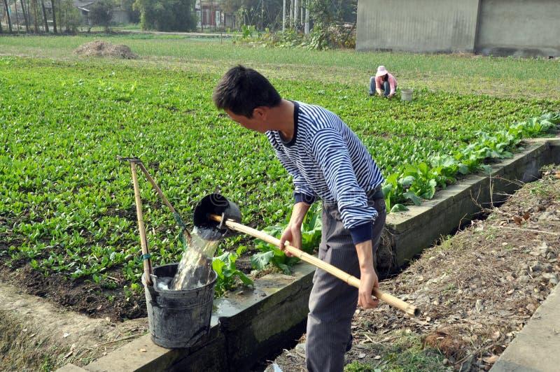 Pengzhou, Cina: Benne di riempimento di Famer immagini stock libere da diritti