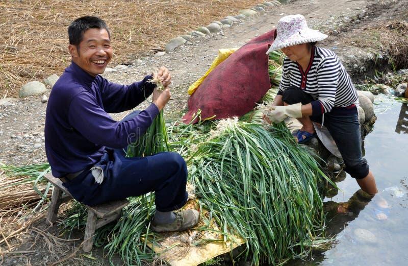 Pengzhou, Cina: Coltivatori che lavano gli Scallions immagini stock libere da diritti