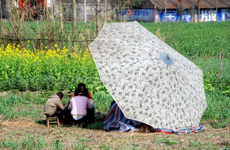 Pengzhou, Cina: Coltivatori che raccolgono gli Scallions immagini stock