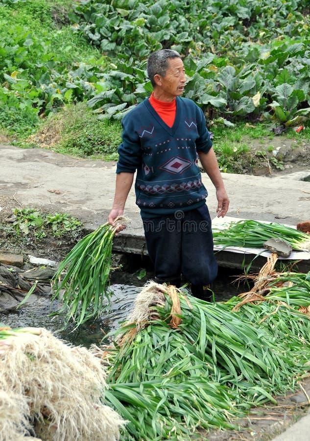 Pengzhou, Cina: Scallions di lavaggio del coltivatore fotografia stock