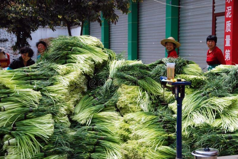 Pengzhou, Cina: Scallions freschi alla gabbia dell'azienda agricola immagini stock libere da diritti