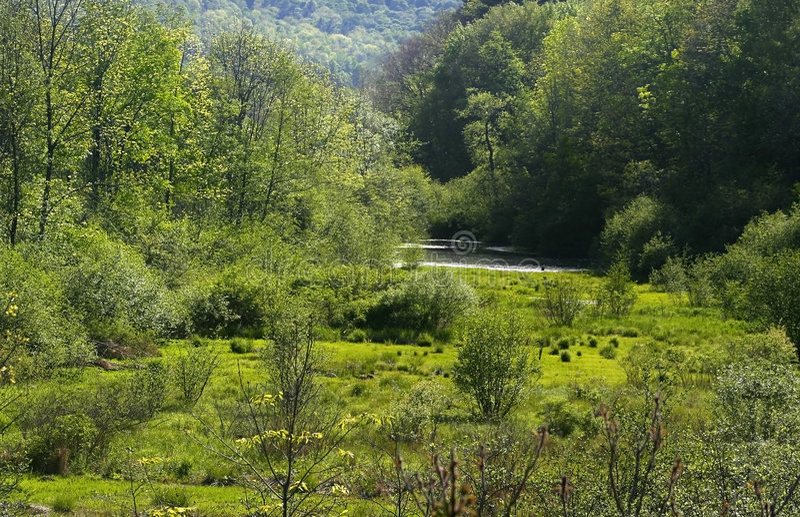 Pennsylvania Forest stock photography