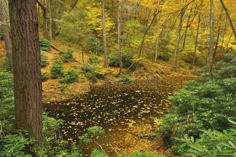 Pennsylvania Forest In Autumn Stock Image