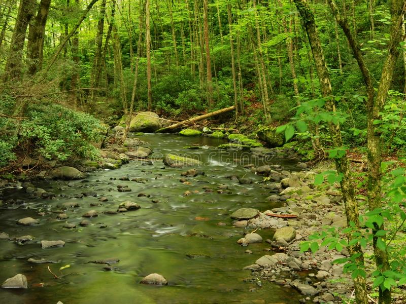 Download Pennsylvania Forest Stream In Spring Stock Image - Image: 9562163