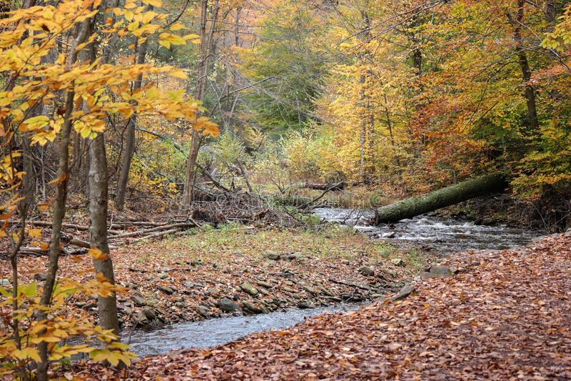 Pennsylvania Ricketts Glen State Park Landscape imagen de archivo libre de regalías