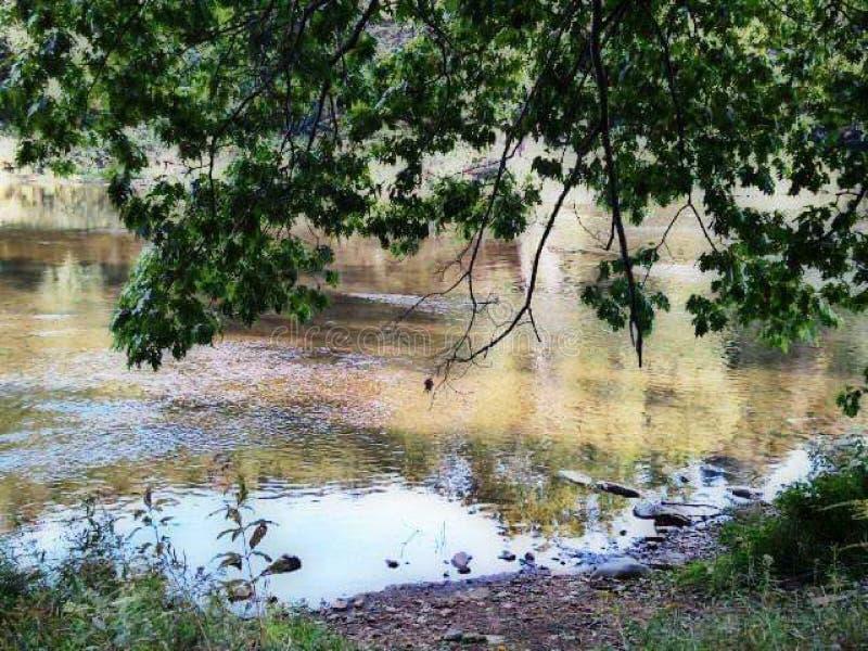 Pennsylvania State Park Woodland Water fotografia stock