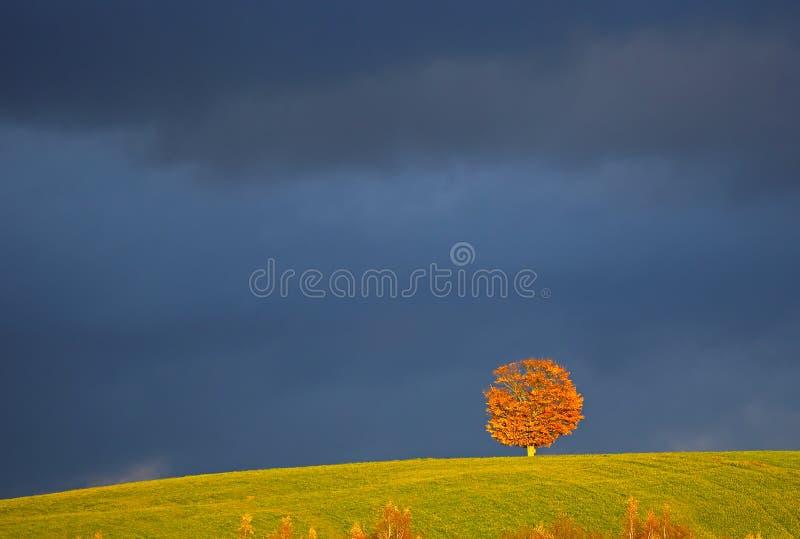 Penobsquis Samotny Drzewny Czerwony Ciemny niebo zdjęcie stock
