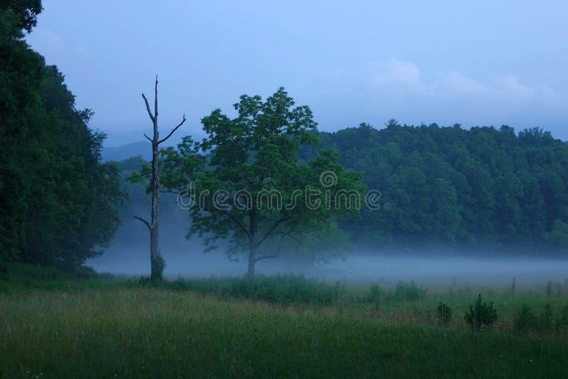 Download Penombra nebbiosa fotografia stock. Immagine di penombra - 202734