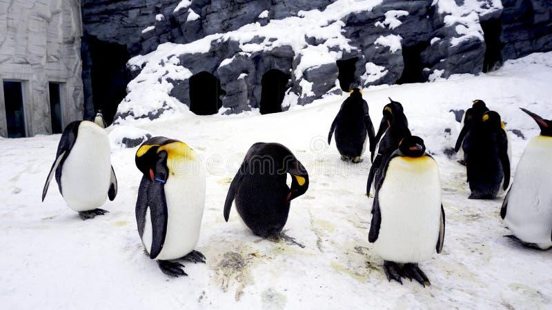 Penquin dierlijke tribune en slaap in de wintersneeuw royalty-vrije stock foto's