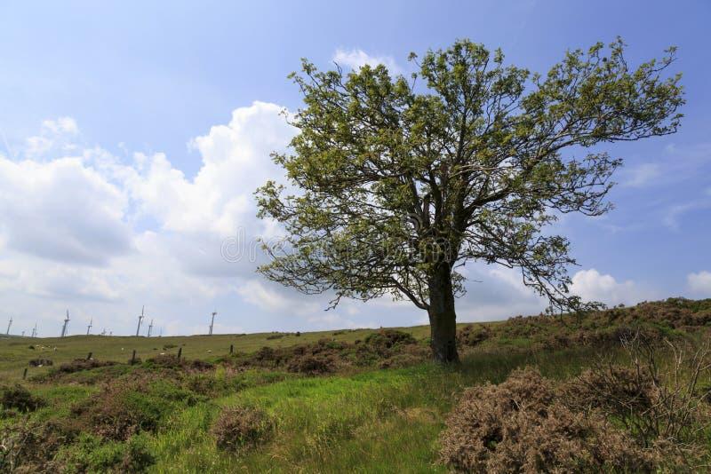 Penrhyddlan Windfarm i LLidiartywaun zdjęcie stock