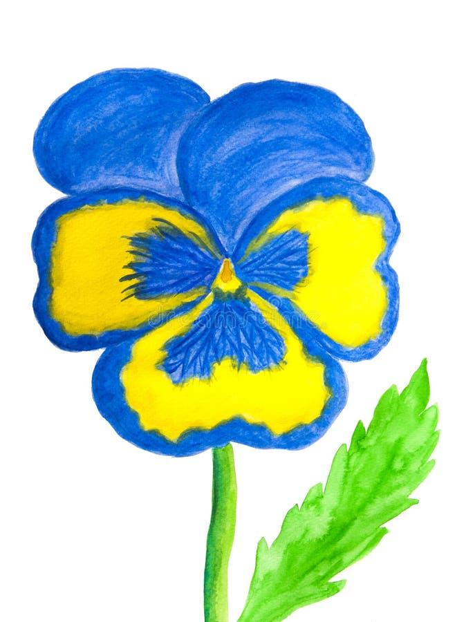 Pensée de couleurs bleu-clair et jaunes sur la peinture blanche d'aquarelle de fond photo libre de droits