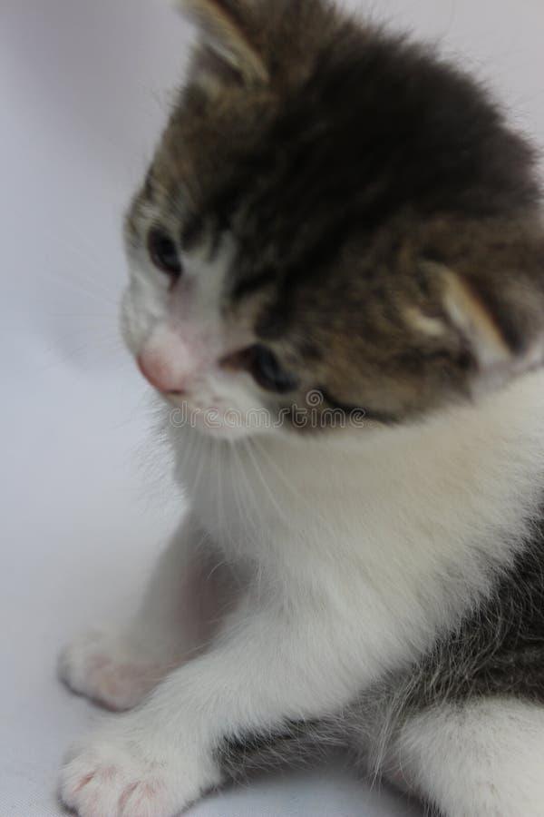 Pensée profonde de Kitty après rêve image libre de droits