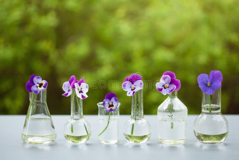 Penséen blommar i kemisk glasföremål, tabellgarnering i trädgård fotografering för bildbyråer