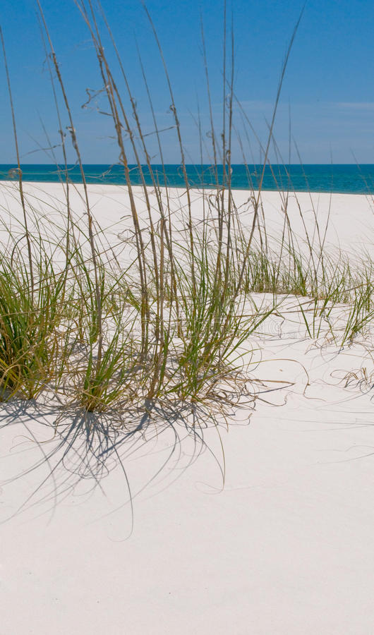 Download Pensacola sand dune stock photo. Image of seagrass, perdido - 14175488