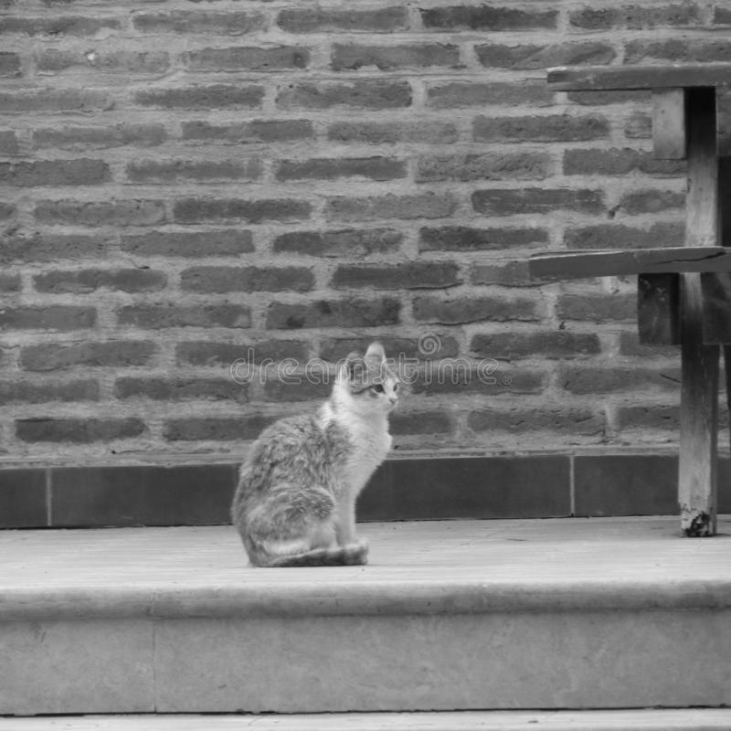 Pensamento do gato fotos de stock royalty free