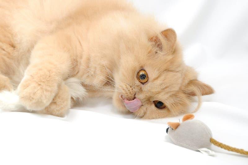 Pensiero del gatto immagini stock libere da diritti