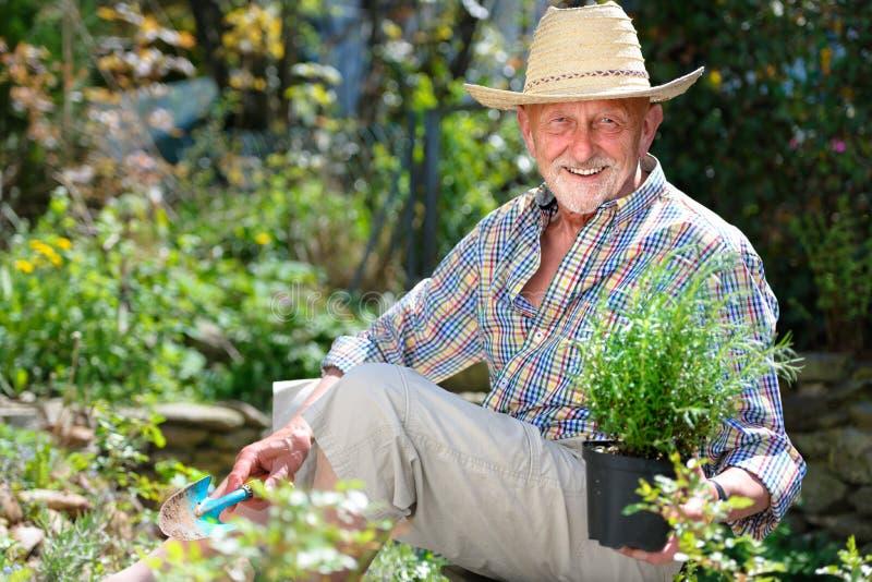 Pensionär i trädgård royaltyfria foton