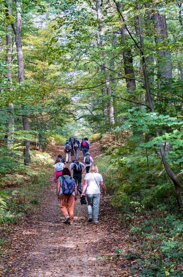 Pensionärer grupperar att fotvandra i skogen i hösten - helgonet Germain Forest, Frankrike arkivbilder