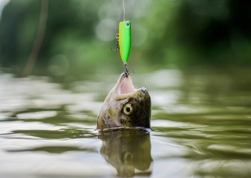 Pensionering Vlieg visserijforel Recreatie en Vrije tijd Visserij op meer Goede Vangst Vissen op haak impasse en stock foto's