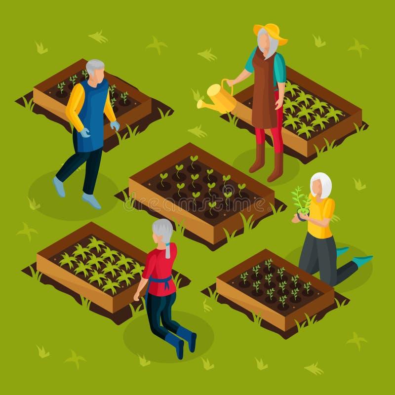 Pensionista isométricos que trabalham no molde do jardim ilustração royalty free