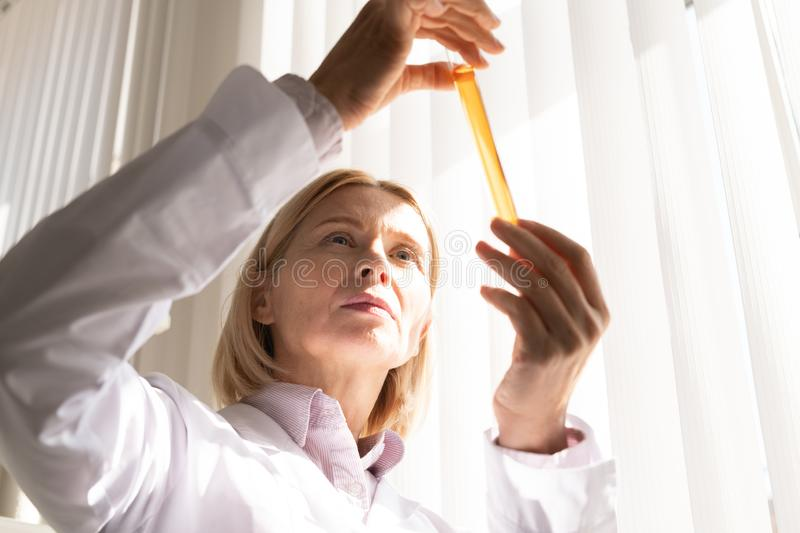 Pensive medical scientist working on drug. Pensive concentrated mature Caucasian medical scientist with blond hair holding test tube with liquid in light while royalty free stock image