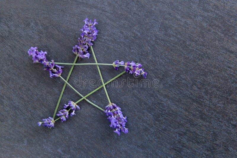 Pentagram - czarownica, Wicca, Pogański symbol robić lawendowi kwiatów kolce przeciw szarość/siwieje łupkowego tło zdjęcie stock