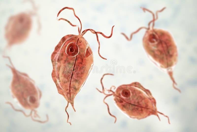 Pentatrichomonas hominis protozoan, 3D illustration. Also known as Trichomonas hominis or T. intestinalis, colonizes human large. Intestine, usually stock illustration