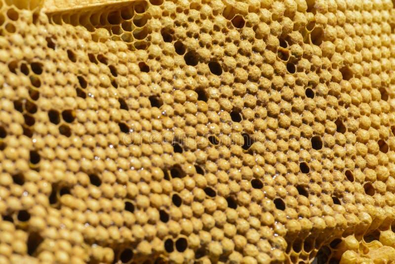 Pente da ninhada das abelhas imagens de stock