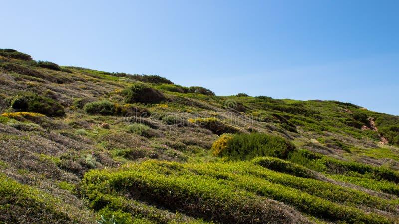 Pente de colline couverte d'herbe images libres de droits