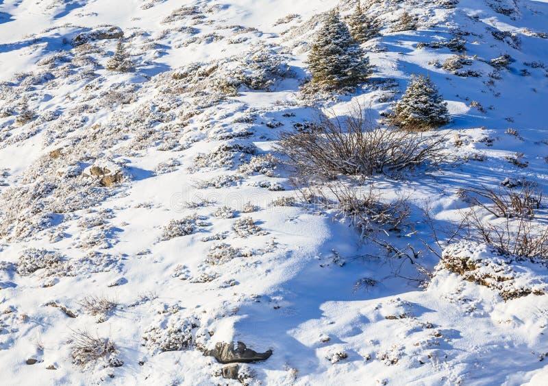 Pente de la montagne couverte de neige photographie stock libre de droits
