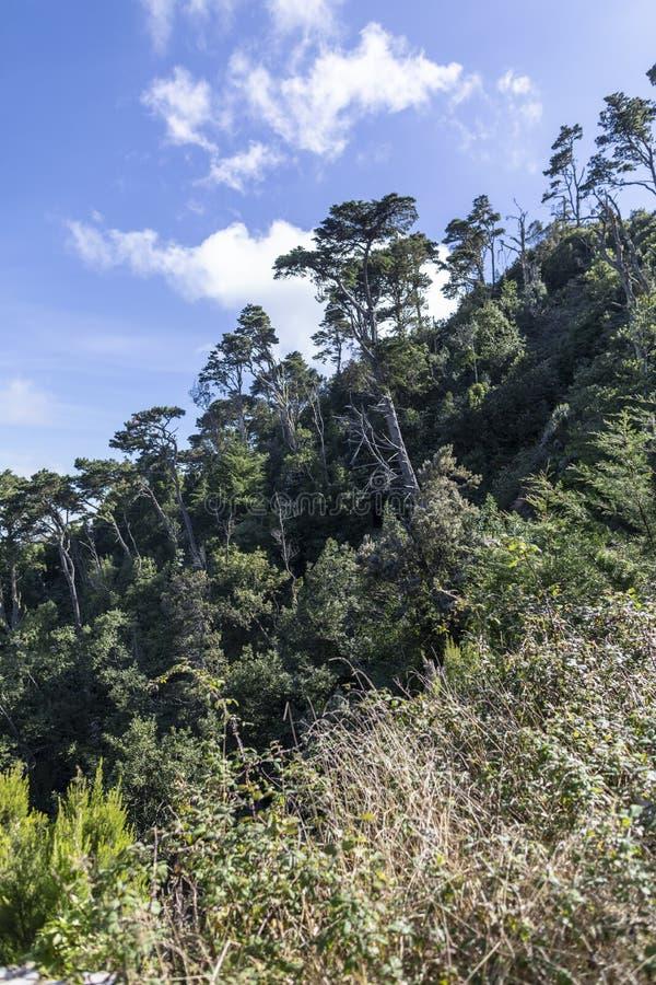 Pente de montagne en parc naturel d'Anaga dans Ténérife photographie stock libre de droits