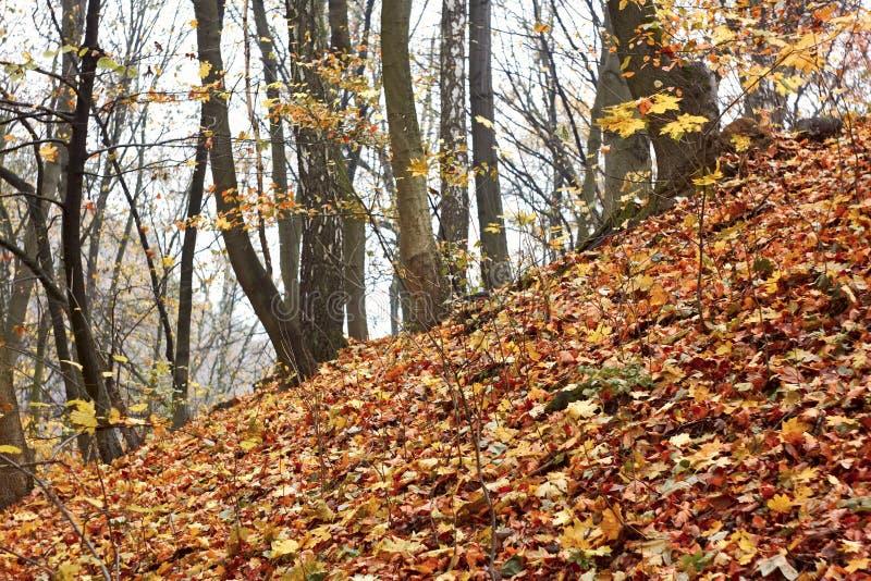 Pente raide dans la forêt d'automne images stock