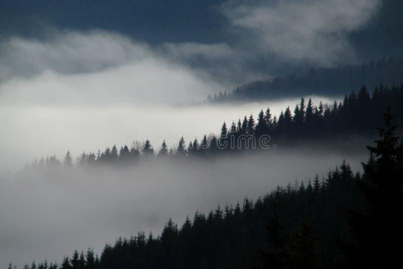 Pentes brumeuses de forêt photos stock