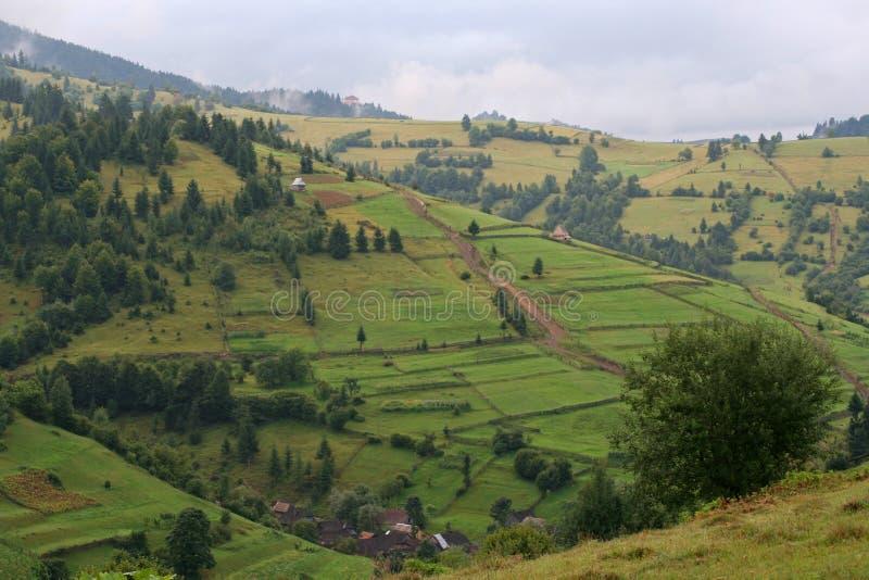 Pentes de montagne vertes d'?t? dans les Carpathiens image stock