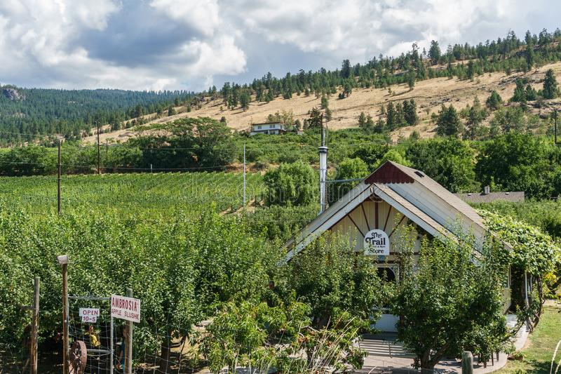 Penticton, Канада - 4-ое августа 2018: Взгляд виноградника в Британской Колумбии Канаде Penticton долины Okanagan стоковые изображения rf