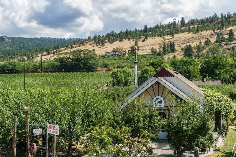 Penticton, Canada - August 04, 2018 : View of vineyard in the Okanagan Valley Penticton British Columbia Canada. Penticton, Canada - August 04, 2018 : The Trail royalty free stock images