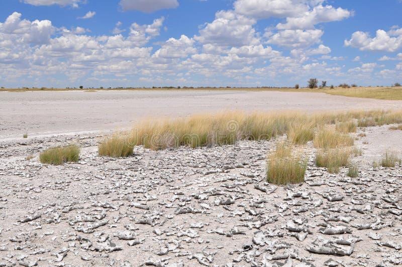 Pentola di Nxai, Botswana fotografie stock