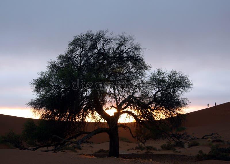 Peolple e deserto imagem de stock