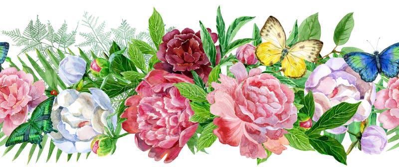 Peonía del jardín, frontera inconsútil Acuarela, pintado a mano, aislada en el fondo blanco stock de ilustración