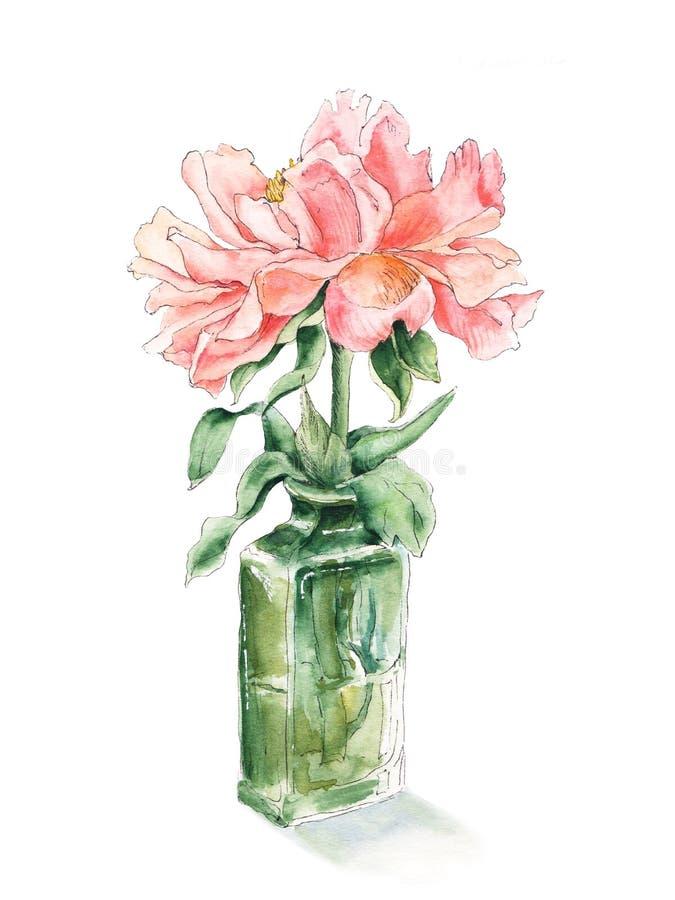 Peonía rosada en la botella de cristal verde, bosquejo de la acuarela, ejemplo botánico libre illustration
