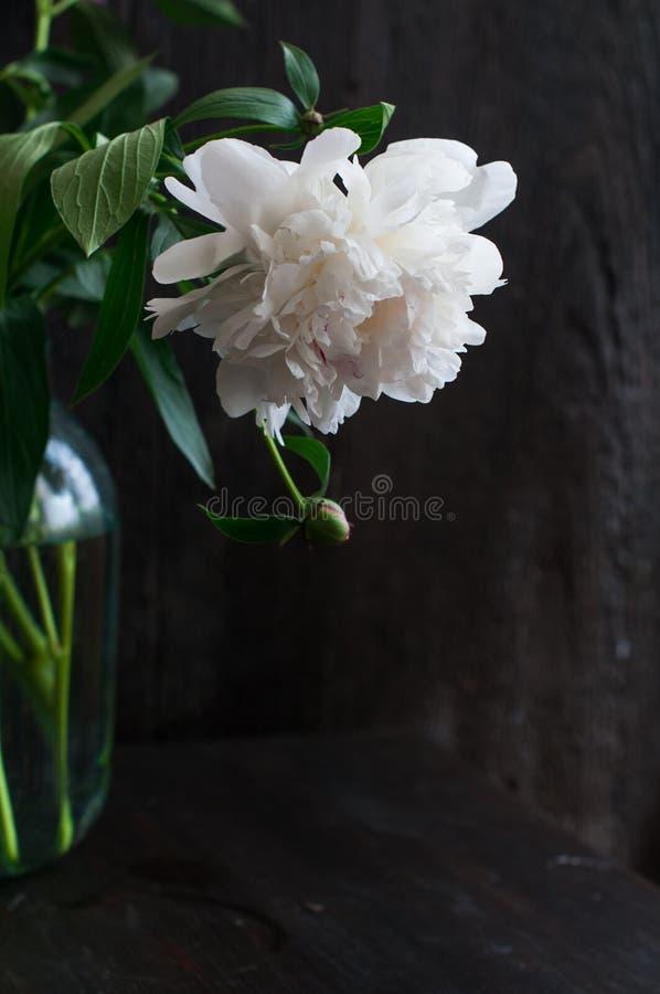 Peonías blancas imponentes en fondo de madera rústico imágenes de archivo libres de regalías